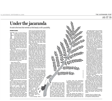 Under-the-Jacaranda